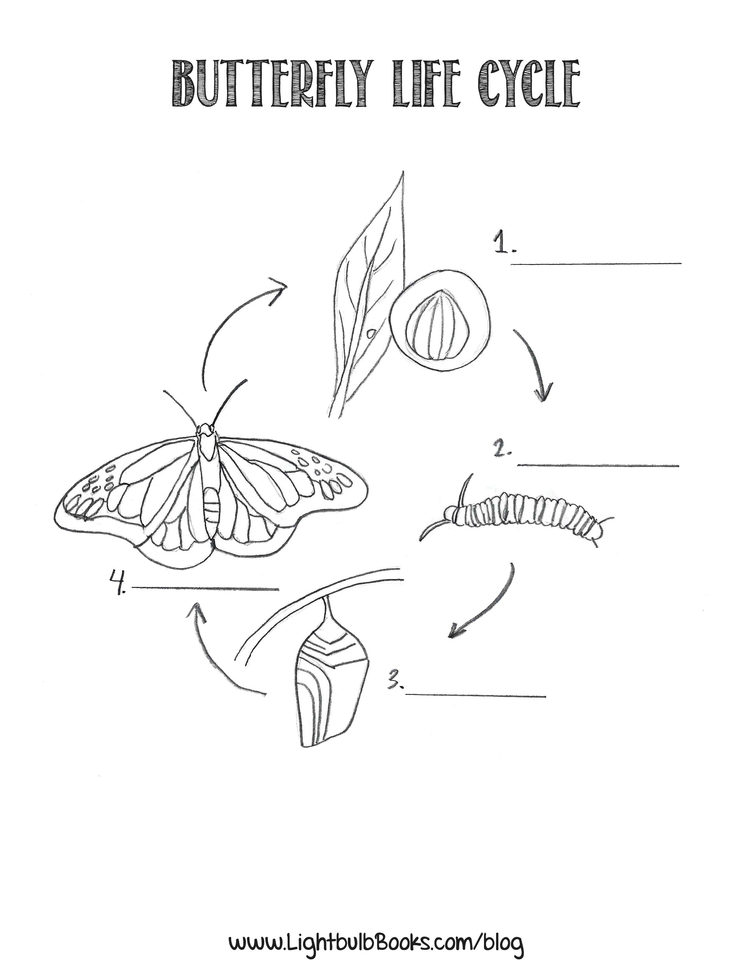 The Life Cycle of a Butterfly   Create WebQuest