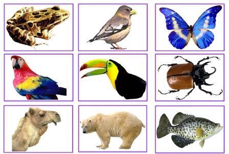 Classifying Animals WebQuest | Create WebQuest