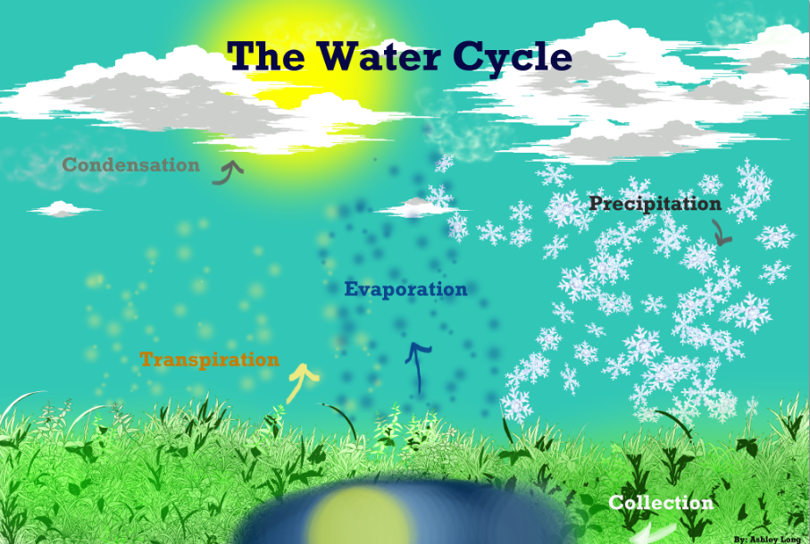 The Water Cycle | Create WebQuest