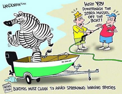 how to get rid of zebra mussels on a boat