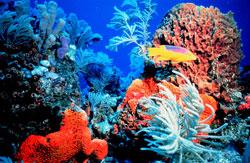 Coral Reefs and Ocean Plants | Create WebQuest