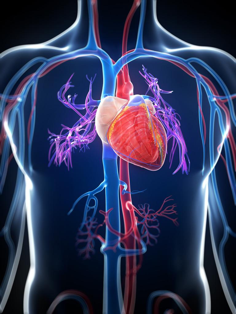 Cardiovascular System Create Webquest