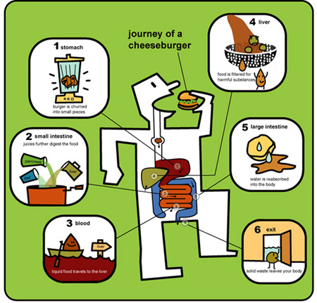 Exploring the digestive system create webquest this video shows you the journey of digestion and helps you to make your model ccuart Gallery