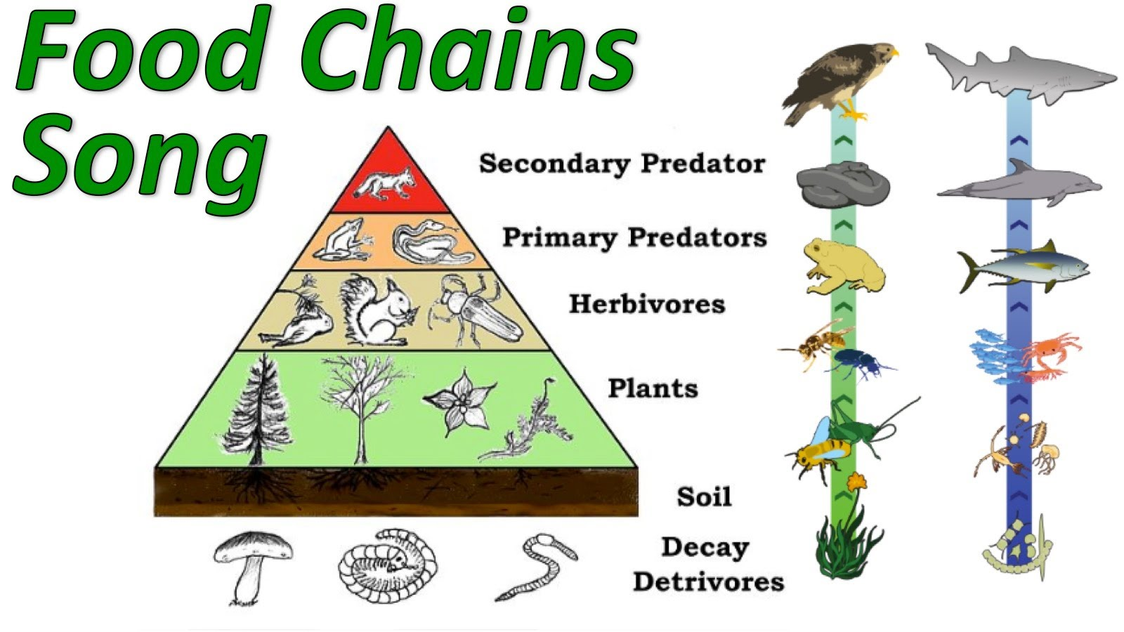 Thefoodweb furthermore Maxresdefault together with Hjwx Fjv additionally Rdprl P besides Soil Food Webusda. on wetland food chain example
