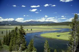 Yellowstone vacation create webquest for this trip we will be planning a once in a lifetime excursion to yellowstone national park see bison elk and moose grazing in their natural habitat sciox Images